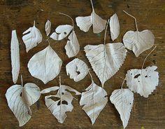 white leaves by jeannemcgee, via Flickr