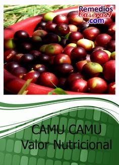 Camu Camu, considerado el remedio natural con el indice mas alto de vitamina C entre todas las frutas del mundo.