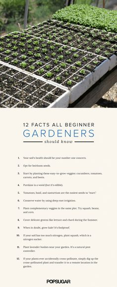 12 Intriguing Facts All Beginner Gardeners Should Know: Living in the generation post-Martha Stewart and residing in the middle of a city with abundant farmers markets, there wasn't incentive for me to ever learn how to sow and harvest my own produce.
