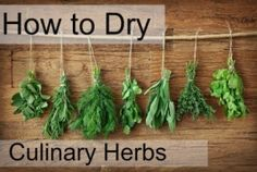 Things to Consider When Drying Culinary Herbs DIY spice cabinet. How do you have success in drying your garden herbs for your spice cabinet? How do you have success in drying your garden herbs for your spice cabinet? Fresco, Growing Herbs, Natural Cleaning Products, Natural Products, Household Products, Organic Farming, Fresh Herbs, Fruits And Vegetables, Gardening Tips