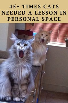 Here are 45+ asshole cats who took their owners' personal space by force.