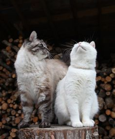 あくび - かご猫 Blog
