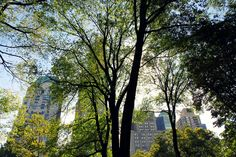 New York New York, Usa, Plants, New York City, Flora, Planters, Nyc