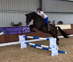 'I told Charlotte Valegro could jump and she said 'prove it'!' Carl Hester told Horse & Hound