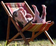 Piglet relaxing