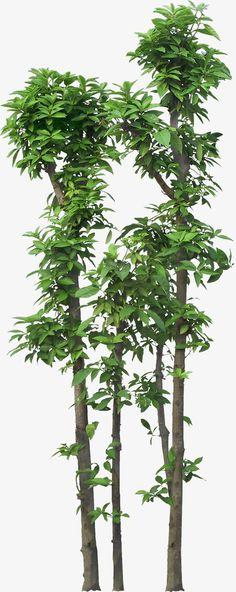Gambar Pohon Png : gambar, pohon, Pohon, Pohon,, Tanaman