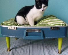 DIY Pet Beds Repurposed From Vintage Suitcases