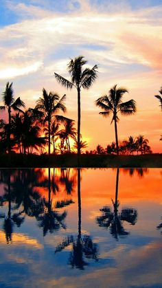 Summer, Good Vibes, Ocean, Beach, Sky, Palm trees, Sunset, Ocean, Sea, Color, Background, Nature, chill #sea #summer #aesthetic #sun #beautiful #wallpaper #beach #water #nature #sky #followback #amazing #outdoors #F4F