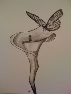 drawings of flowers and butterflies | Pencil Drawings Of Flowers And Butterflies