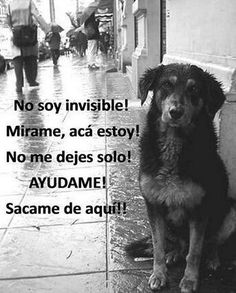 dia internacional del perro callejero 2014 - Google Search / Darle hogar a un animal callejero es de las experiencias más enriquecedoras y reconfortantes que puedes experimentar #adopta