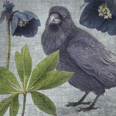 RAVEN FLORA #1 - Fine Art Print, Raven Portrait   June Hunter Images