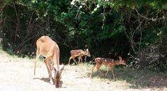 Shady Oaks Riverside RV Retreat   Buchanan Dam Central Texas, Kangaroo, Giraffe, Rv, Animals, Baby Bjorn, Felt Giraffe, Motorhome, Animales