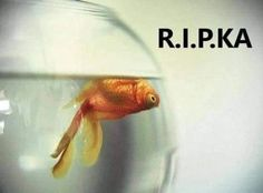 Humor, Fish, Pets, Sarcasm, Humour, Pisces, Funny Photos, Funny Humor, Comedy
