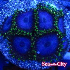 Coral, Sea, City, The Ocean, Cities, Ocean