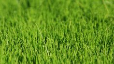 Pisar na grama e deixar o mal ir embora...