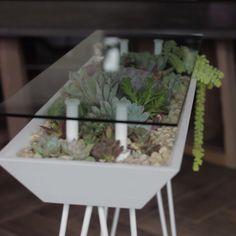 Indoor Greenhouse, Indoor Gardening, Terrarium Table, Yoga Studio Decor, Epoxy Resin Table, Flower Stands, Cozy Place, Aesthetic Bedroom, Growing Herbs