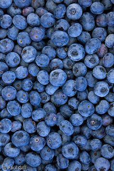 Blueberries at Greymarsh berry farm, Sequim, Washington
