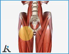 esercizi muscoli pavimento pelvico possoso infiammare la prostata mo