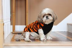 77dc2aac 15 Best Cincinnati Bengals Dogs images in 2015 | Dogs, Cincinnati ...