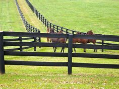 fences - fencing for the farm
