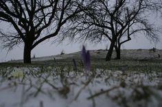 Winter's revenge by Beniamin Sabo on Revenge, Spring, Winter, Nature, Flowers, Winter Time, Naturaleza, Nature Illustration, Royal Icing Flowers