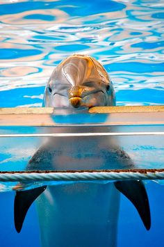 What a great shot! - Dolphin at the Baltimore Aquarium  ♥