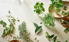 7 Lesser-Known Healing Herbs That Belong In Your Kitchen - mindbodygreen.com