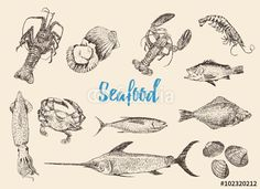Vector: Hand drawn sketch set of seafood.