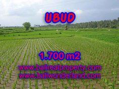 Property - INVESTASI PROPERTI DI BALI - MURAH ! TANAH DIJUAL DI UBUD TJUB398 (JUAL TANAH MURAH DI UBUD BALI TJUB398)