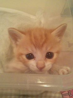 """""""A warm little kitten can melt an ice-cold heart."""" --Jo Kittinger"""