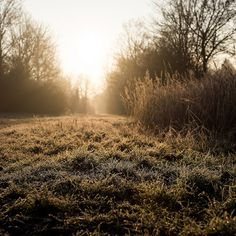 Frozen grass | Flickr - Photo Sharing!
