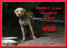 Why can 't we just love them. Share to stop animal abuse! IF, YOU ARE,  AGAINST ANIMAL ABUSE OF ANY FORM......THEN DO NOT BE EMBARRESED TO RESHARE!