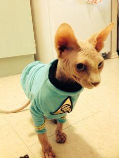 Star trek cat tunic by ekeka on Etsy