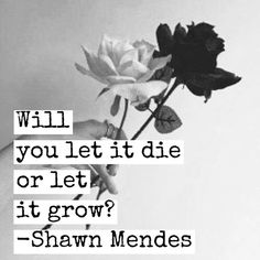 Lyrics, rose, and quote image