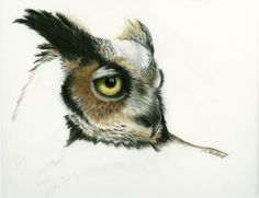 Great Horned Owl Drawing by Heather Mitchell