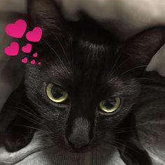 みなさまこんばんは😉 素敵なクリスマスを過ごしてますか🎄🎁🎂🍗🥂✨ こたつからこんばんわ😽🌟 ゴロゴロ甘える😍💕 #黒猫 #クロネコ #くろねこ #くろねこ部  #愛猫 #ねこ #ねこすたぐらむ  #ねこスタグラム#にゃんすたぐらむ #ねこがすき #ふわもこ #くろ #cat #black #blackcat #blackcats