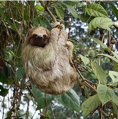 It's a sloth kinda day