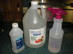 Homemade Glass Cleaner 1 Cup Water 1 4c White Vinegar