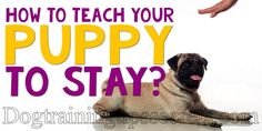How To Train Your Dog , Dog Training in Home, Dog Training History, Dog Training Books , Dog Training and Dog Training methods Dog Training Books, Dog Training Methods, Basic Dog Training, How To Train Your, Puppies, Teaching, Dogs, Cubs, Pet Dogs