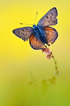 ~~out of the colors butterfly by ~struller~~