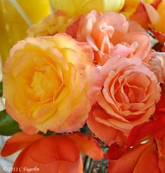 Dreamsicle Sherbet Roses!  Oh, how I love these!
