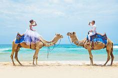 Поездка на верблюдах в день свадьбы