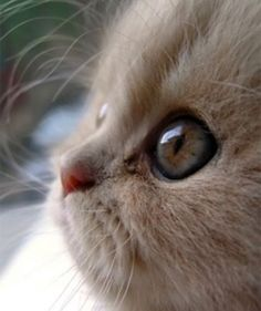Awwwww, what a big eyed beauty…..