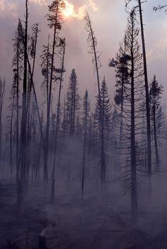 *national park yellowstone *natural disasterweather phenomenon burning forest sky*forestfirecharred wood*
