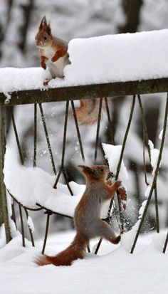 Squirrel snow fun...