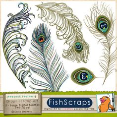 Peacock Tail Feathers: Clip Art for Personal & Commercial use Arts and Crafts. $5.75, via Etsy.