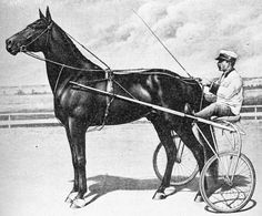 Dan Patch (Pacer) broke world speed records at least 14 times in the early finally setting the world's record for the fastest mile by a harness horse during a time trial in a record that stood unmatched for 32 years. Standardbred Horse, Thoroughbred, Quarter Horses, Palomino, Harness Racing, American Saddlebred, Horse Racing, Race Horses, Breyer Horses