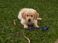 Buddy as a pup