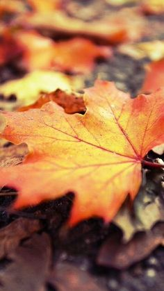 Lost in an Autumn & Winter dream Soft Autumn, Autumn Leaves, Maple Leaves, Bokeh Photography, Autumn Aesthetic, Fall Pictures, Abstract Photos, Fall Harvest, Fall Season