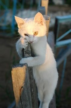Click the Photo For More Adorable and Cute Cat Videos and Photos animal and worksheet for kids, funny and complacent nba rookies. I Love Cats, Crazy Cats, Cool Cats, Baby Animals, Funny Animals, Cute Animals, Cute Kittens, Cats And Kittens, Ragdoll Kittens